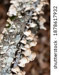 Moss  Lichens And Mushrooms...