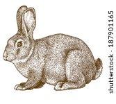 Stock vector vector illustration of engraving rabbit on white background 187901165