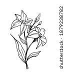 flower outline. lily blossom.... | Shutterstock .eps vector #1879238782