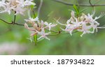 spring flowers and growth in...   Shutterstock . vector #187934822