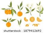 oranges set. exotic tropical...   Shutterstock .eps vector #1879412692