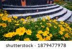 beautiful yellow cosmos... | Shutterstock . vector #1879477978
