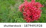 natural green leaf pattern of... | Shutterstock . vector #1879491928