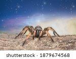 Close Up Trapdoor Spider On...