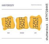 hair porosity types... | Shutterstock .eps vector #1879728445