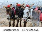 Donkey Ride At English Seaside...