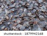 Old Fallen Dark Leaves Lie On...