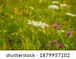 wild flowers meadow in summer | Shutterstock . vector #1879957102