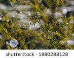 White Winter  Ice Bubbles Of...
