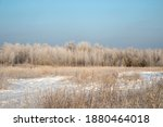 winter landscape with trees...   Shutterstock . vector #1880464018