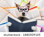 Jack Russell Dog Reading A Book ...