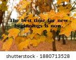 autumn leaves. yellow. blur... | Shutterstock . vector #1880713528