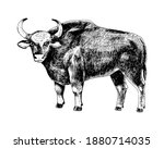 hand drawn bull gaur isolated...   Shutterstock .eps vector #1880714035