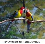 parrots   Shutterstock . vector #188089838