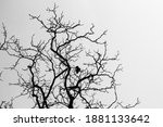 A Bird On The Dead Tree From...