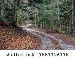 Forest Path  Low Tatras...