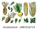 sketch of food vegetables by... | Shutterstock .eps vector #1881516715