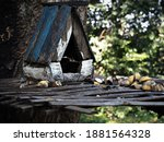 Squirrel Wooden House In The...