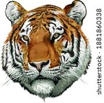 tiger face color. vector... | Shutterstock .eps vector #1881860338