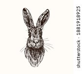 hare  rabbit  face  front view  ... | Shutterstock .eps vector #1881918925