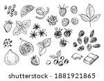 fruits  berries  spices. vector ... | Shutterstock .eps vector #1881921865
