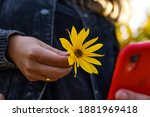 The Yellow Flower In Woman's...