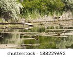 vegetation  reeds and tree... | Shutterstock . vector #188229692
