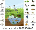 ecosystem of pond with... | Shutterstock .eps vector #1882300468