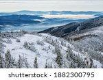 Snowy Coniferous Forest In Low...