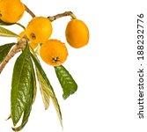 Loquat Medlar Fruit With Water...