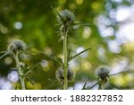 A Selective Focus Of The...