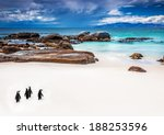 Wild South African Penguins ...
