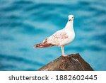 Seagulls Are Very Intelligent...