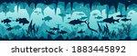 Underwater World With...