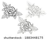 beautiful blooming rose with... | Shutterstock . vector #1883448175