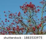 red berries tree christmas... | Shutterstock . vector #1883533975