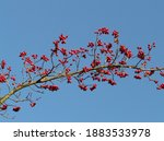 red berries tree christmas... | Shutterstock . vector #1883533978