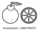 hallabong. a dicotyledonous... | Shutterstock .eps vector #1883748475
