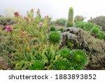 Vegetation Of Kilimanjaro....