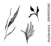 outline abstract leaves plants. ... | Shutterstock .eps vector #1884045268