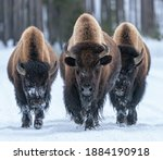 Kings Of The Road   Three Bison ...
