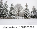 winter landscape with snow... | Shutterstock . vector #1884509635