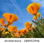 Springtime Blooms Of Californi...