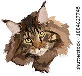 Brown Cat Maine Coon Vector...