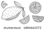 lemon or lime  whole fruit and...   Shutterstock .eps vector #1884662572