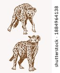 graphical vintage set of hyena  ... | Shutterstock .eps vector #1884964138