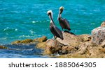Two Pelicans Sitting On A Rock...