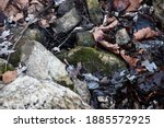 A collection of rocks and leaves at Dardenne Prairie Park in O'Fallon, Missouri. There is moss and other flora.