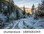 Path In Forest  Big Fatra...