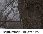 Squirrel Climbing Behind Tree...